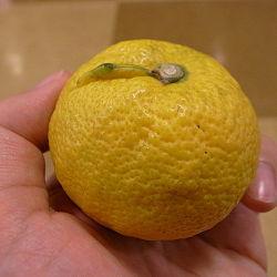 250px-Citrus_jabara_by_OpenCage